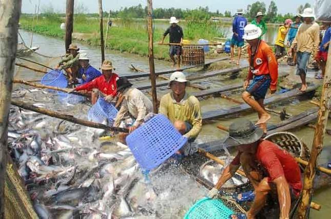 Trung Quốc nhập khẩu trở lại thanh long và chuối của Việt Nam - Ảnh 2.