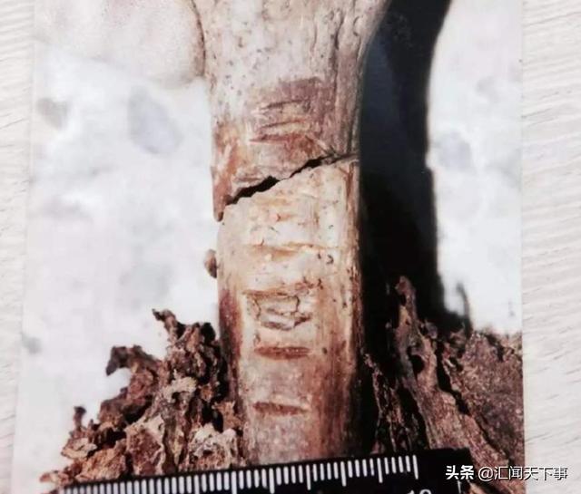 Tìm đồ trên gác, người phụ nữ tái mặt phát hiện bộ xương khô, vô tình hóa giải vụ mất tích 10 năm trước, vạch trần hung thủ không ai ngờ - Ảnh 6.
