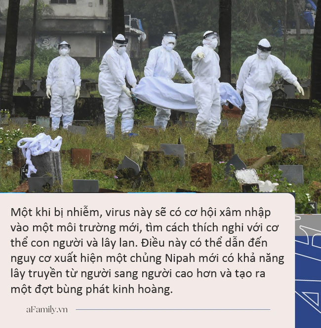 Tại sao thế giới nên lo lắng về sự bùng phát của virus Nipah ở Ấn Độ? - Ảnh 2.