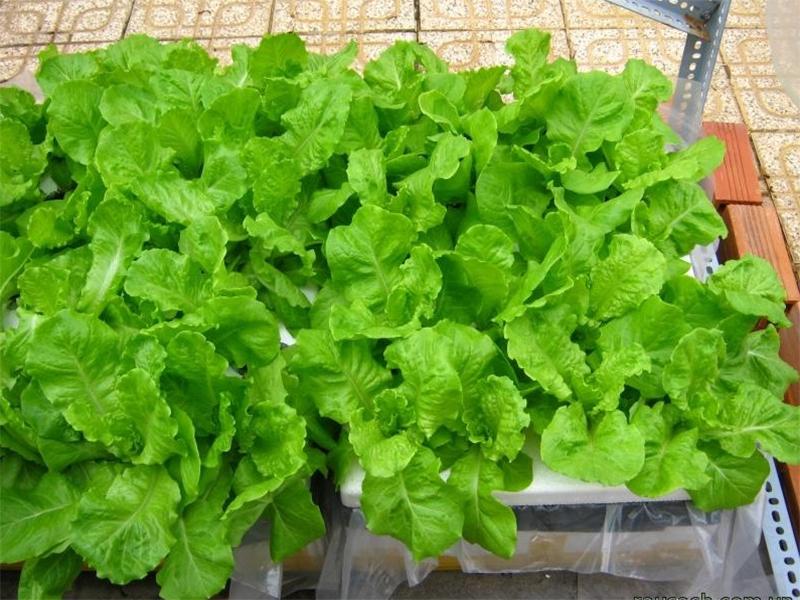 8 loại rau củ thích hợp gieo trồng vào mùa thu, các chị em trồng trong hộp xốp vẫn lên mơn mởn - Ảnh 10.