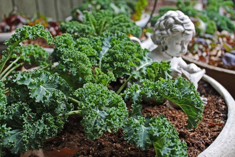 8 loại rau củ thích hợp gieo trồng vào mùa thu, các chị em trồng trong hộp xốp vẫn lên mơn mởn - Ảnh 8.