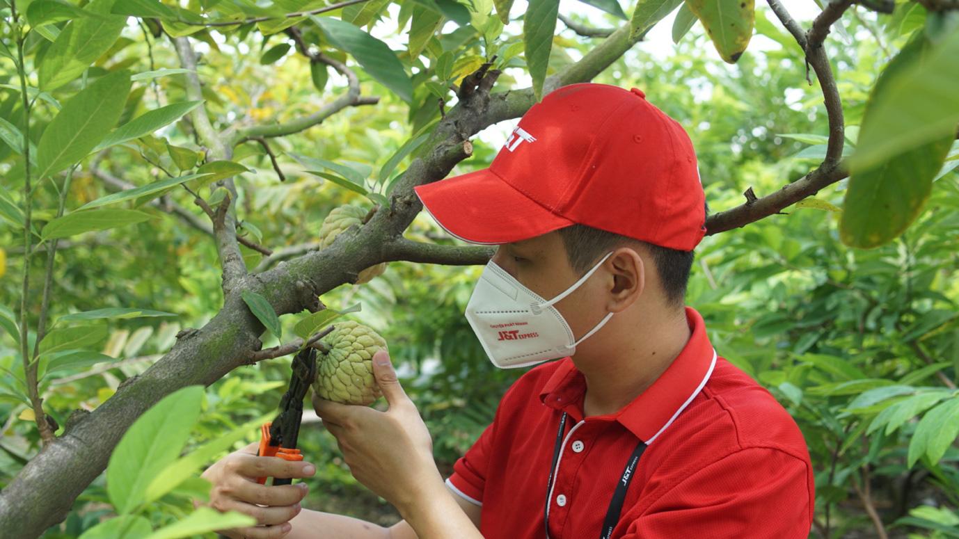 J&T Express nối dài hành trình hỗ trợ tiêu thụ nông sản Việt trong mùa dịch - Ảnh 2.