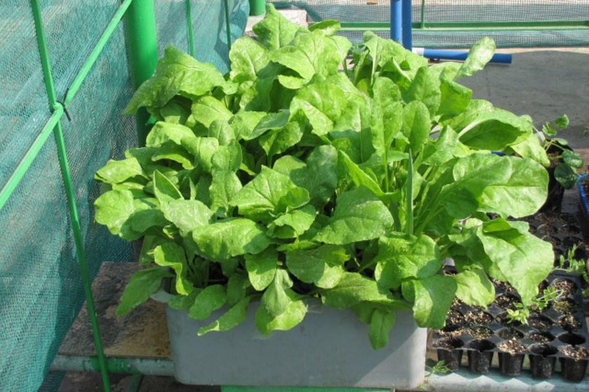 8 loại rau củ thích hợp gieo trồng vào mùa thu, các chị em trồng trong hộp xốp vẫn lên mơn mởn - Ảnh 14.