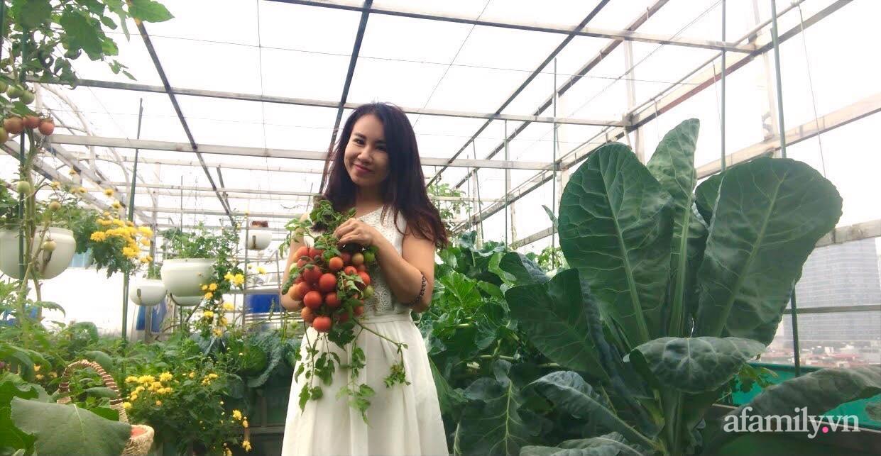 """Mẹ đảm Hà Nội chia sẻ bí quyết """"vàng"""" trồng cây cà chua bạch tuộc trên sân thượng, quanh năm năng suất trái sai trĩu cành - Ảnh 2."""