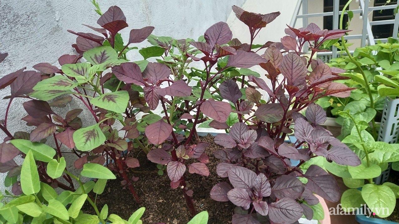 Sân thượng 15m2 đủ các loại rau xanh tốt tươi không lo thiếu thực phẩm mùa dịch ở Hà Nội - Ảnh 10.