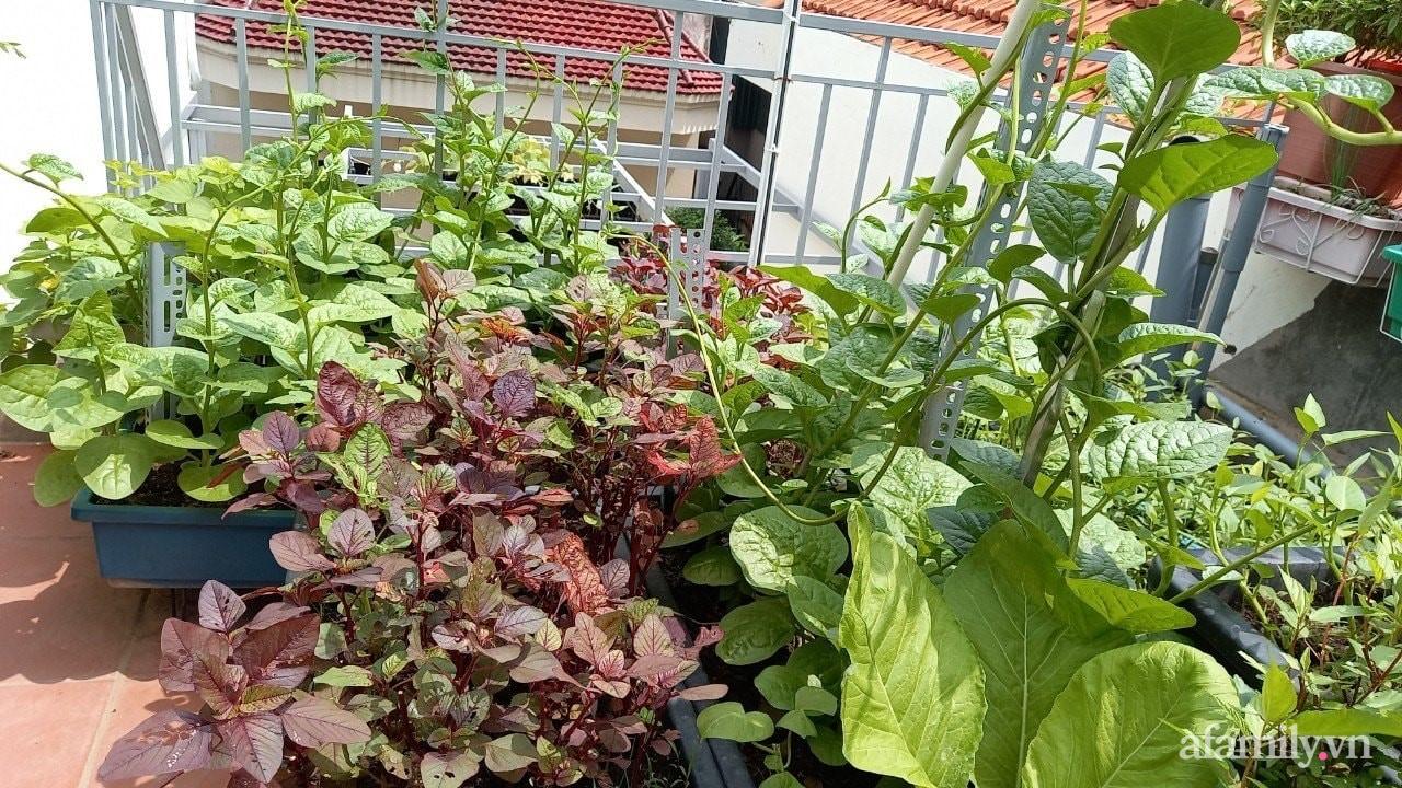 Sân thượng 15m2 đủ các loại rau xanh tốt tươi không lo thiếu thực phẩm mùa dịch ở Hà Nội - Ảnh 11.