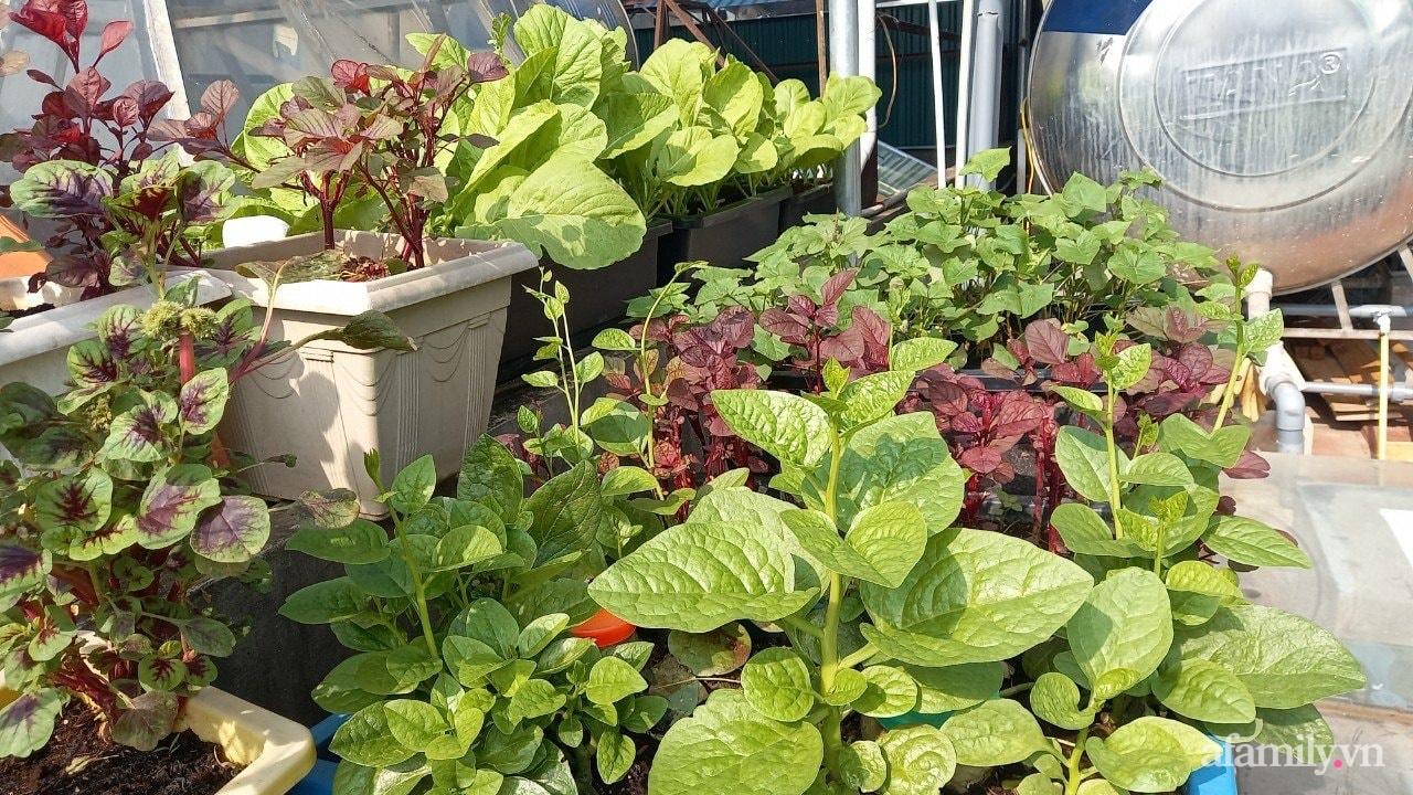 Sân thượng 15m2 đủ các loại rau xanh tốt tươi không lo thiếu thực phẩm mùa dịch ở Hà Nội - Ảnh 13.