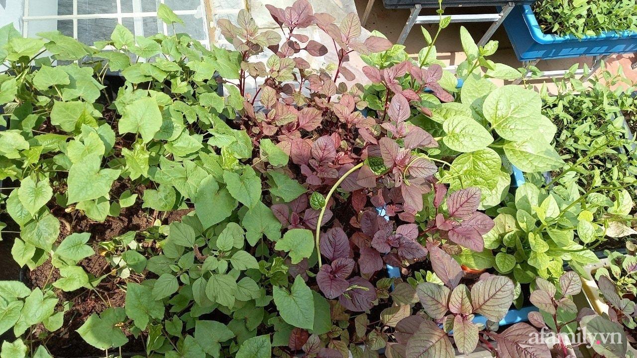 Sân thượng 15m2 đủ các loại rau xanh tốt tươi không lo thiếu thực phẩm mùa dịch ở Hà Nội - Ảnh 2.