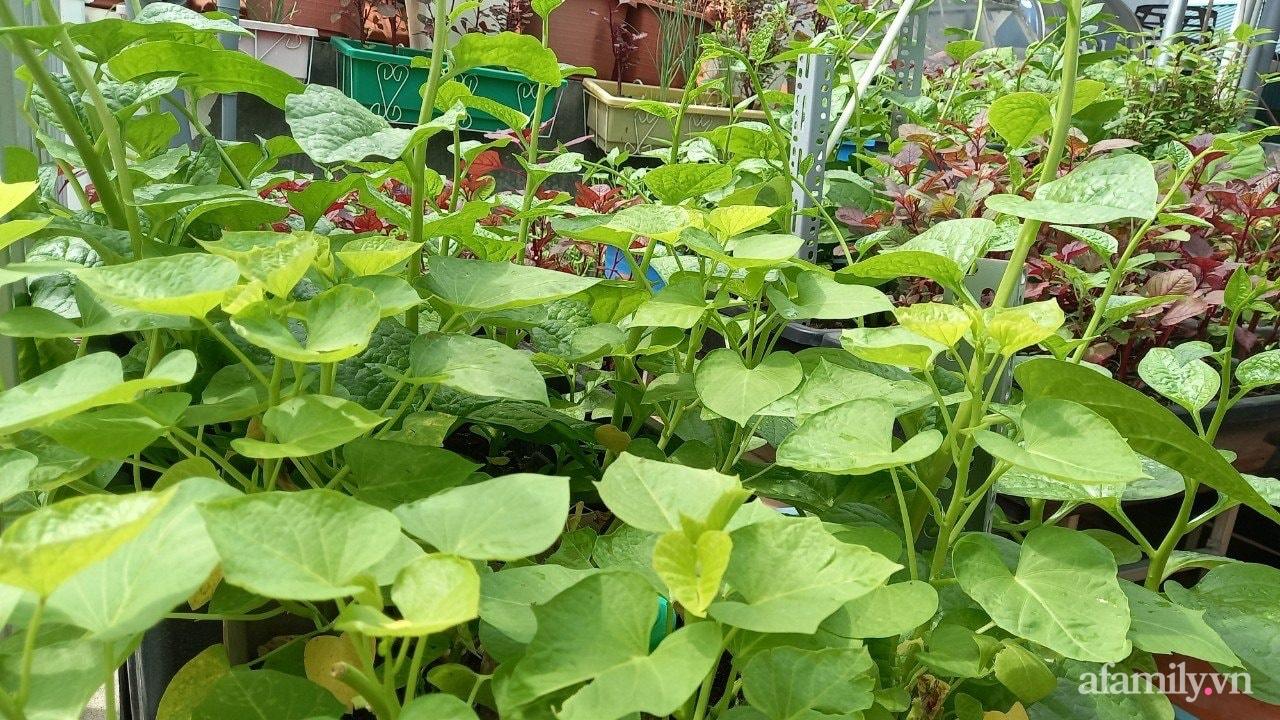 Sân thượng 15m2 đủ các loại rau xanh tốt tươi không lo thiếu thực phẩm mùa dịch ở Hà Nội - Ảnh 7.