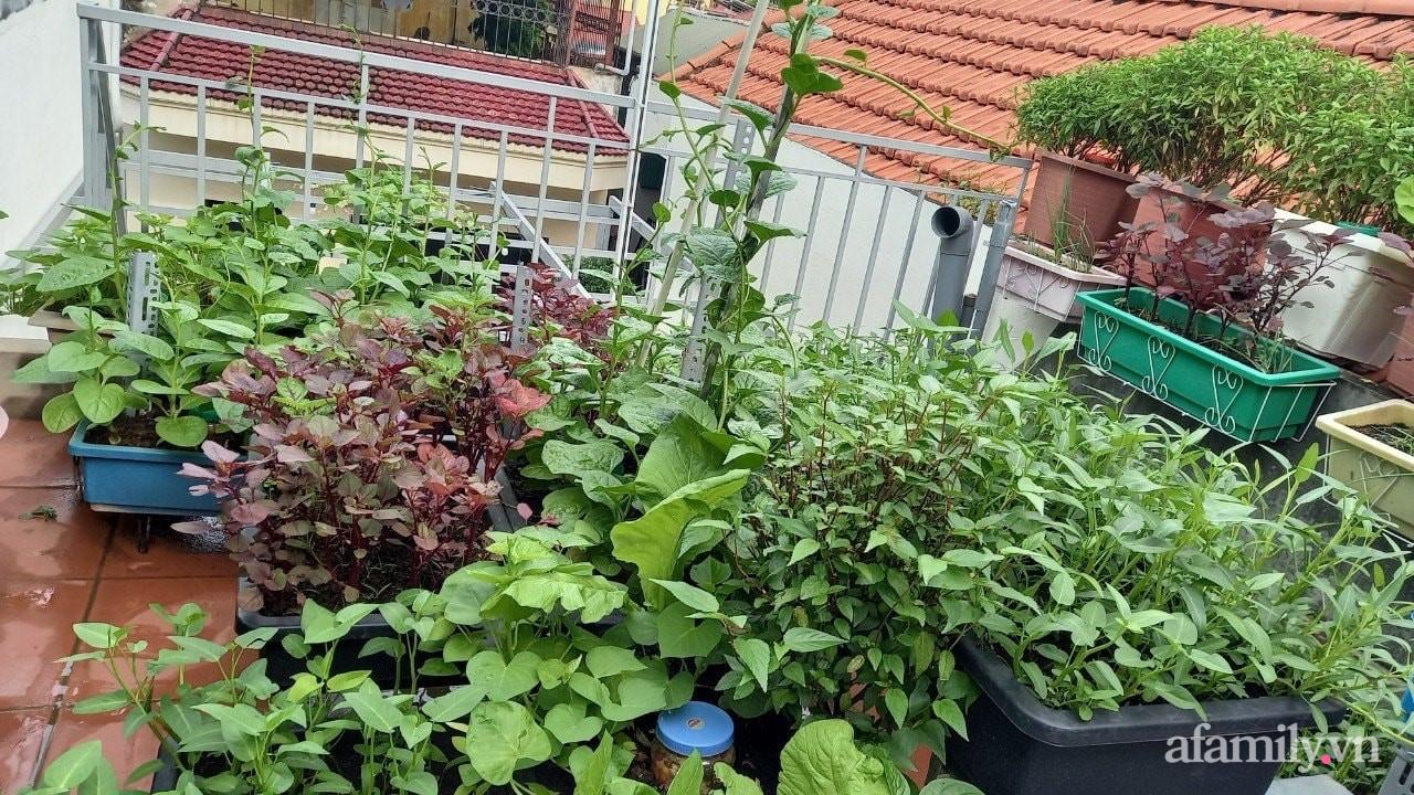 Sân thượng 15m2 đủ các loại rau xanh tốt tươi không lo thiếu thực phẩm mùa dịch ở Hà Nội - Ảnh 4.