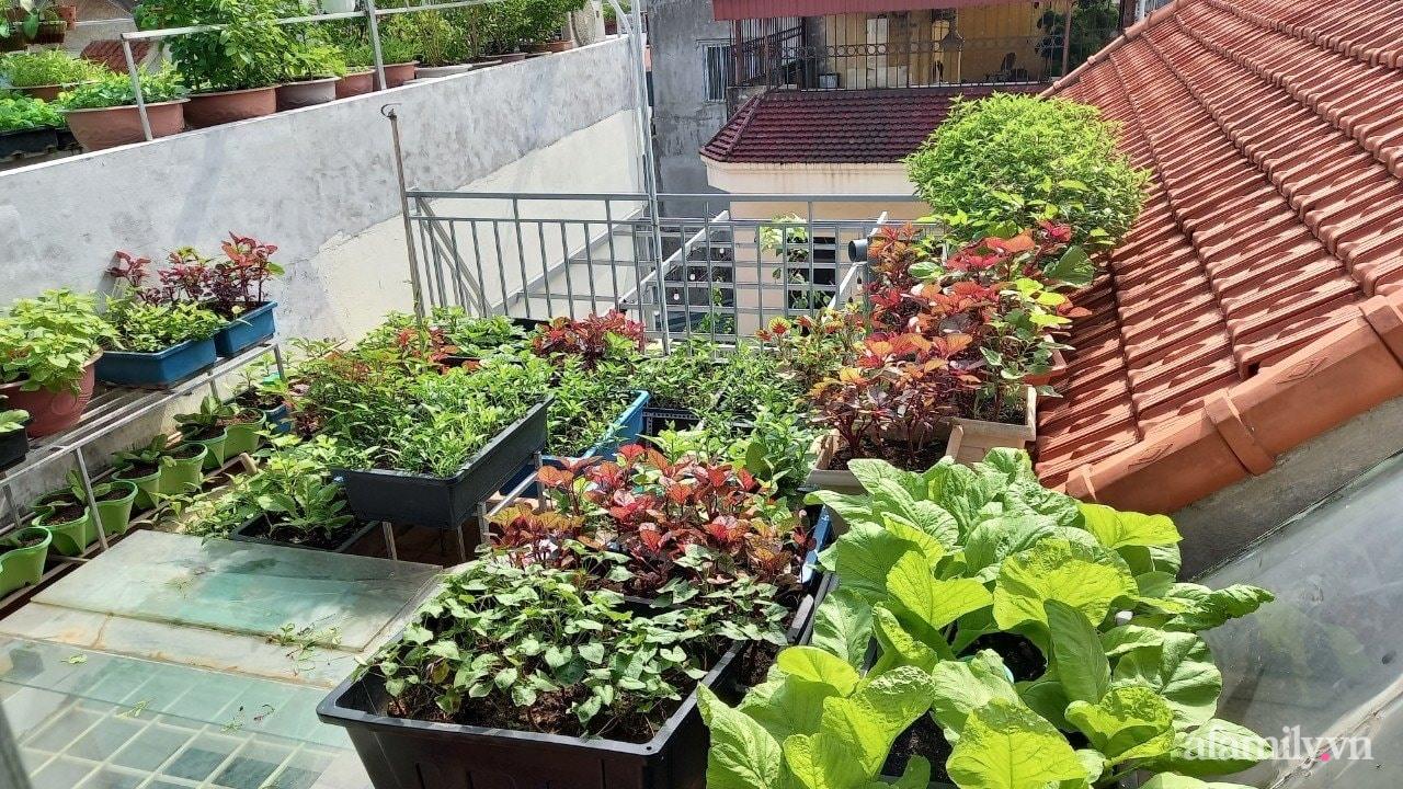 Sân thượng 15m2 đủ các loại rau xanh tốt tươi không lo thiếu thực phẩm mùa dịch ở Hà Nội - Ảnh 1.