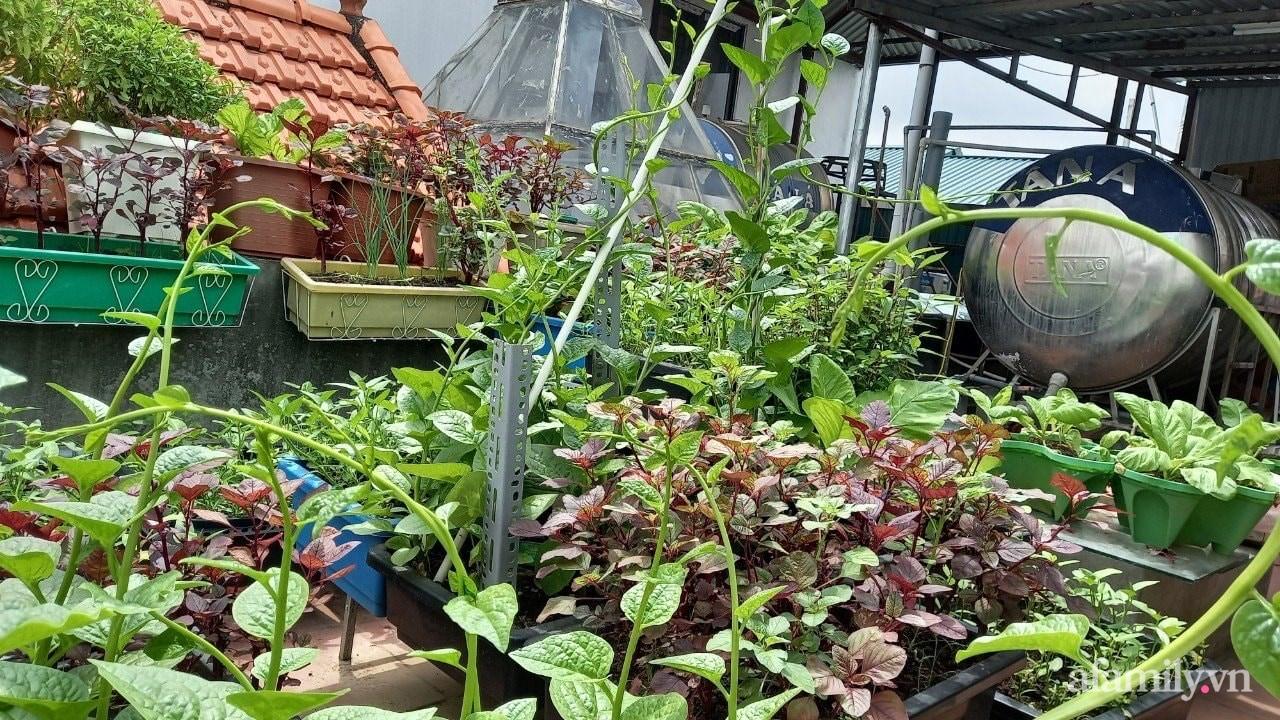 Sân thượng 15m2 đủ các loại rau xanh tốt tươi không lo thiếu thực phẩm mùa dịch ở Hà Nội - Ảnh 3.