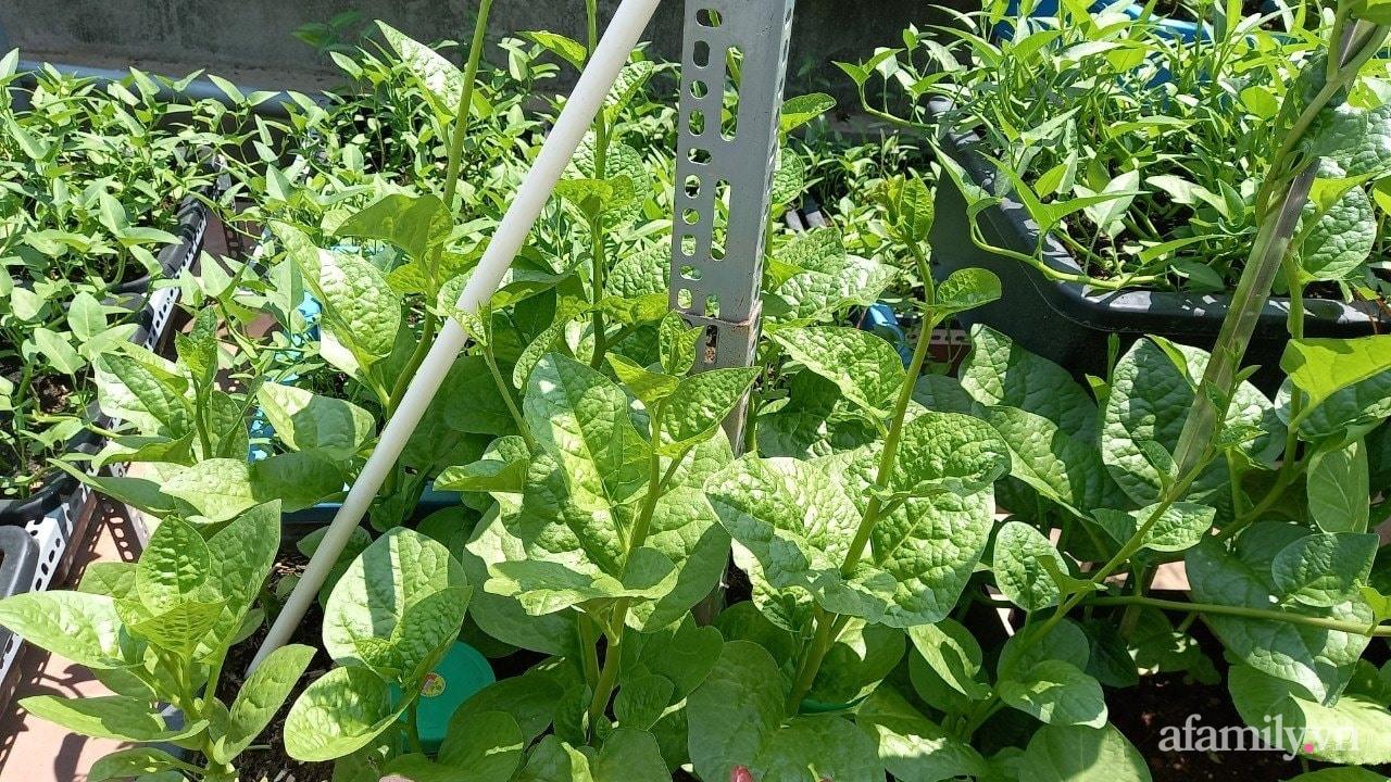Sân thượng 15m2 đủ các loại rau xanh tốt tươi không lo thiếu thực phẩm mùa dịch ở Hà Nội - Ảnh 8.