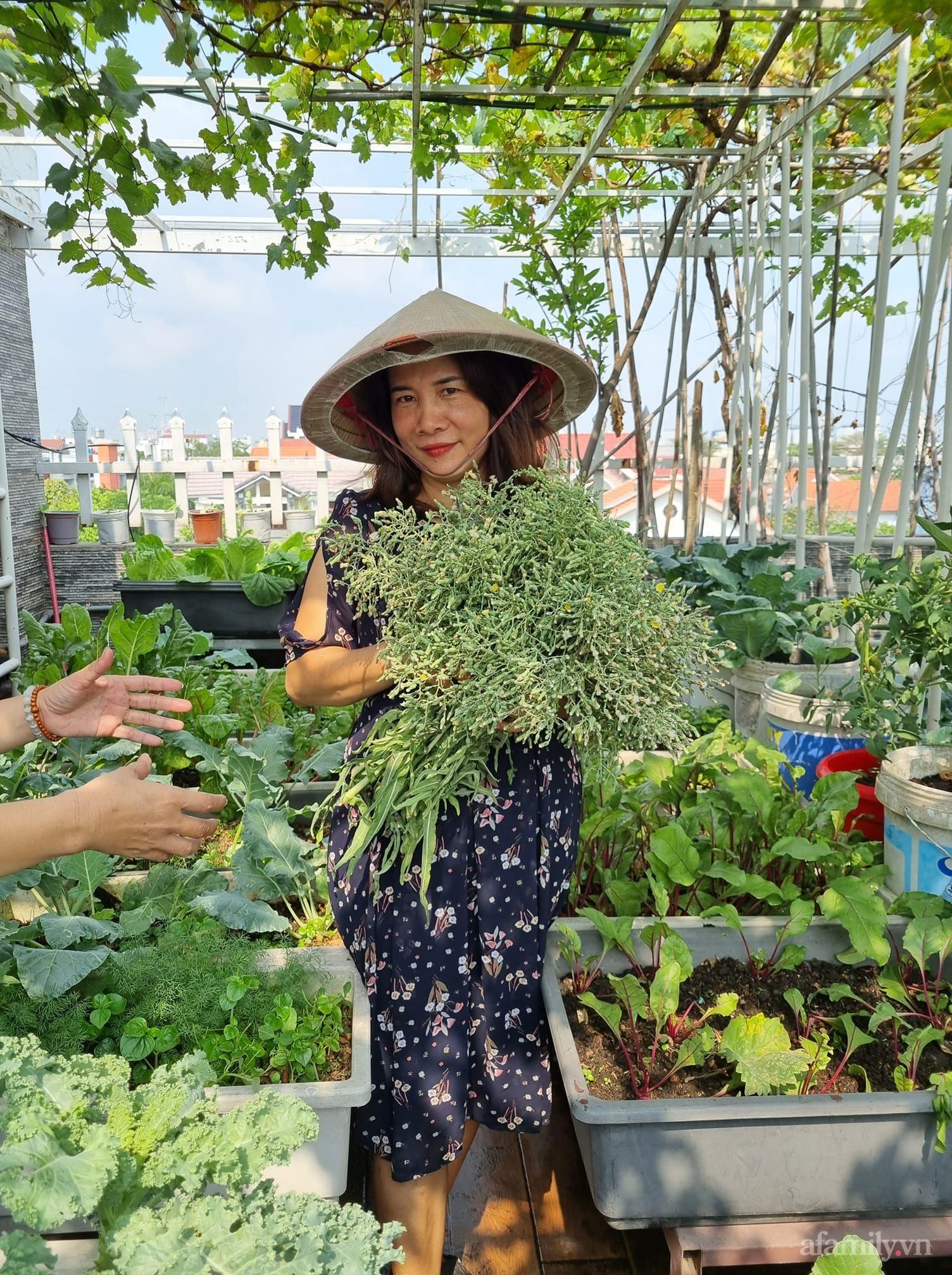 Mẹ đảm Sài Gòn trồng nho đỏ Ninh Thuận sai trĩu cành trên sân thượng 80m² - Ảnh 2.