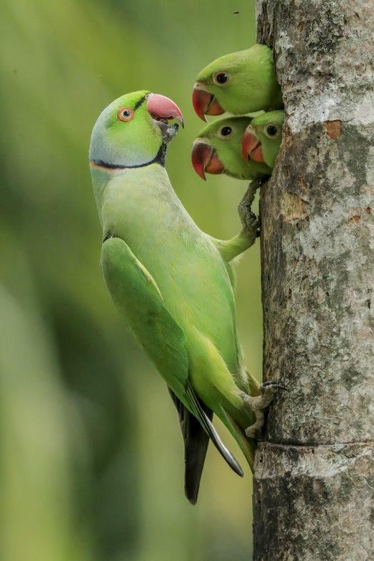 10 bức ảnh động vật hoang dã đẹp nhất năm 2021 và những câu chuyện hậu trường chưa kể - Ảnh 6.