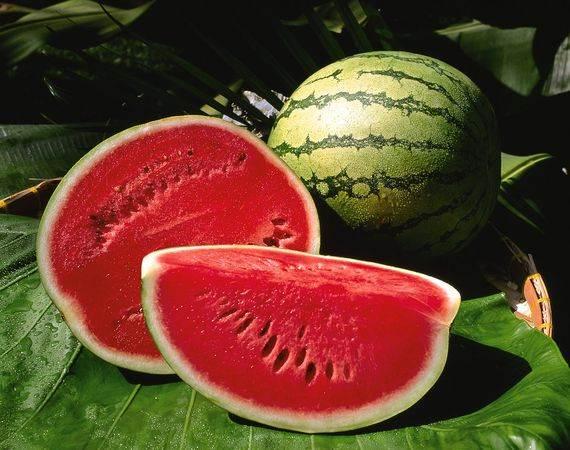 Ăn dưa hấu nhiều nhưng bạn đã biết loại quả này có giống đực và giống cái? - Ảnh 2.