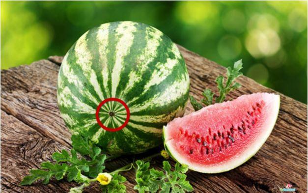 Ăn dưa hấu nhiều nhưng bạn đã biết loại quả này có giống đực và giống cái? - Ảnh 4.