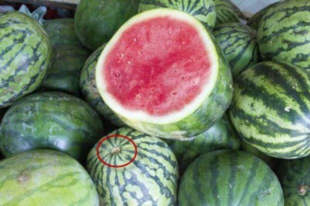 Ăn dưa hấu nhiều nhưng bạn đã biết loại quả này có giống đực và giống cái? - Ảnh 5.