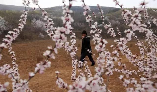 11 năm trồng hoa đào trên đồi trống, ai cũng tưởng lão nông này gàn dở, cho đến khi biết lý do... - Ảnh 1.