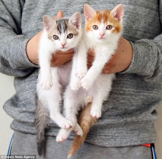 Tan chảy với đôi mèo không thể ngủ nếu không được nằm cạnh nhau - Ảnh 7.