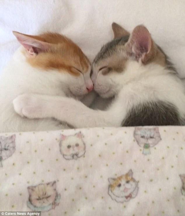 Tan chảy với đôi mèo không thể ngủ nếu không được nằm cạnh nhau - Ảnh 5.