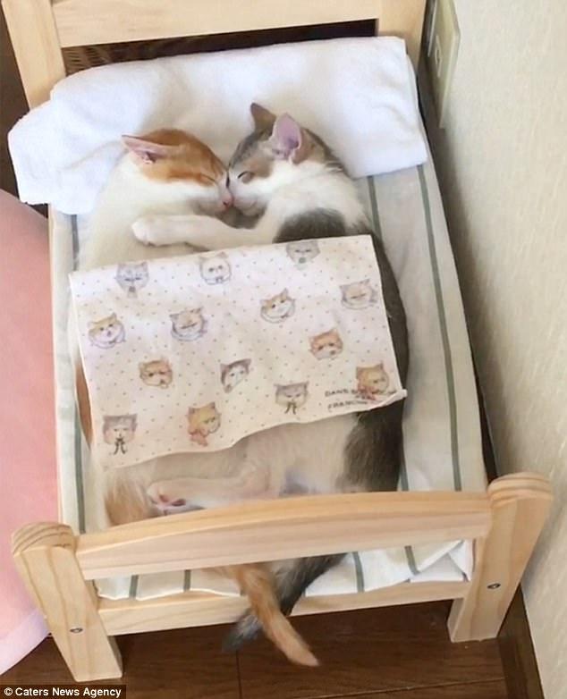 Tan chảy với đôi mèo không thể ngủ nếu không được nằm cạnh nhau - Ảnh 6.