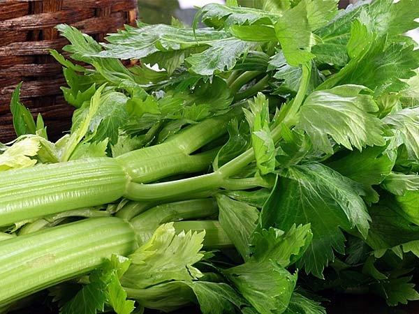Ăn nhiều cần tây vào mùa thu này đi, nếu bạn muốn phòng chống những căn bệnh này và làm sạch da - Ảnh 1.