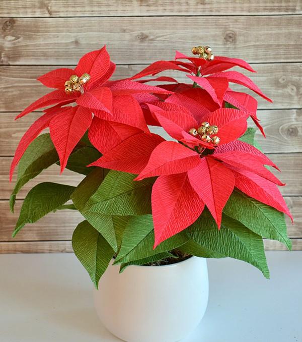 Tự làm chậu hoa trạng nguyên sắc đỏ rực rỡ trang trí nhà đẹp - Ảnh 9.