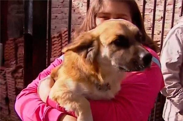 Chú chó cứu mạng bé sơ sinh 28 ngày tuổi bị bỏ rơi trong túi nilon - Ảnh 2.