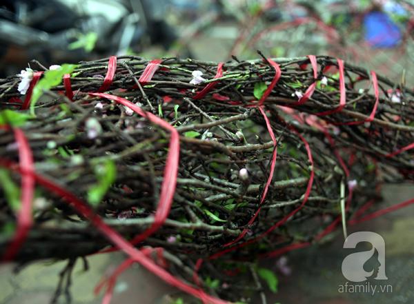 Đào rừng Mộc Châu về đến Hà Nội có giá cao nhất 30 triệu/cành - Ảnh 16.
