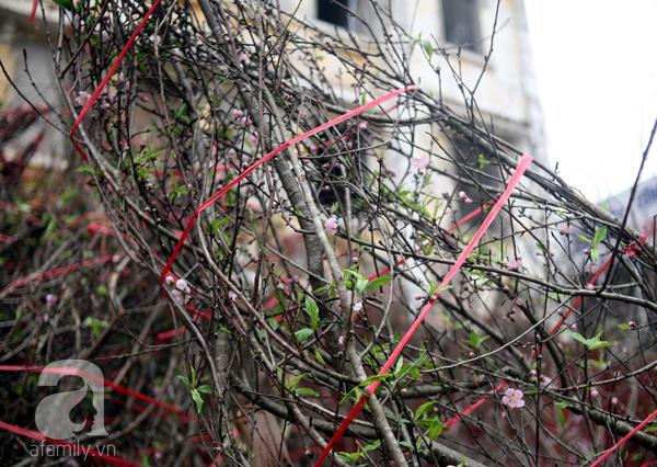 Đào rừng Mộc Châu về đến Hà Nội có giá cao nhất 30 triệu/cành - Ảnh 15.