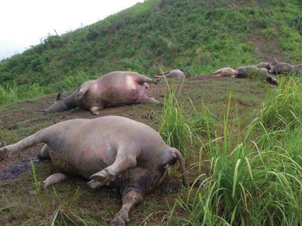Yên Bái: Một phụ nữ đi chăn trâu bị sét đánh tử vong đúng lúc trời mưa giông - Ảnh 1.