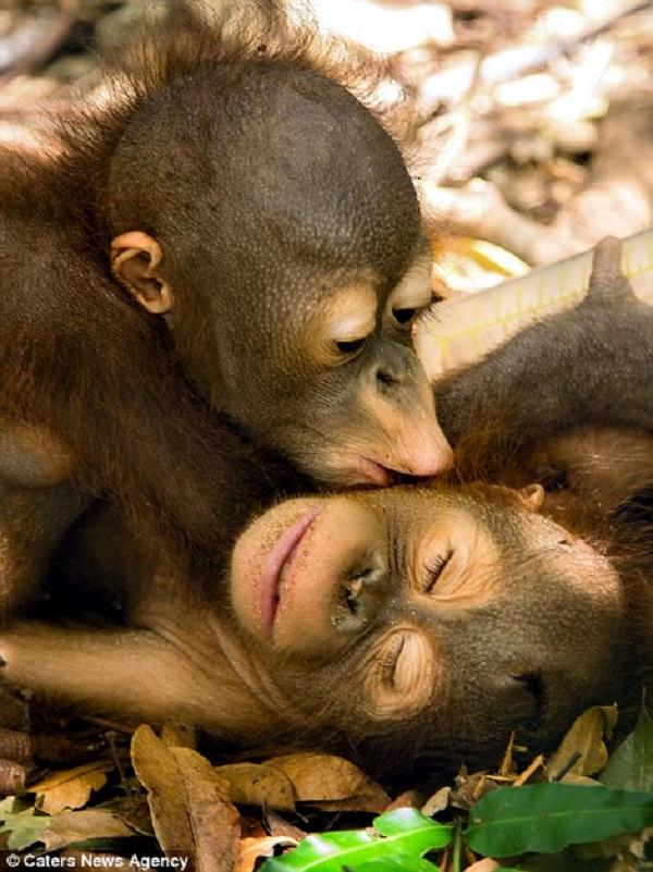 Những hình ảnh hơn vạn lời nói cho thấy động vật cũng có tình yêu đẹp thế này - Ảnh 2.