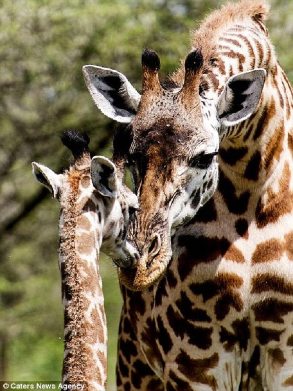 Những hình ảnh hơn vạn lời nói cho thấy động vật cũng có tình yêu đẹp thế này - Ảnh 3.