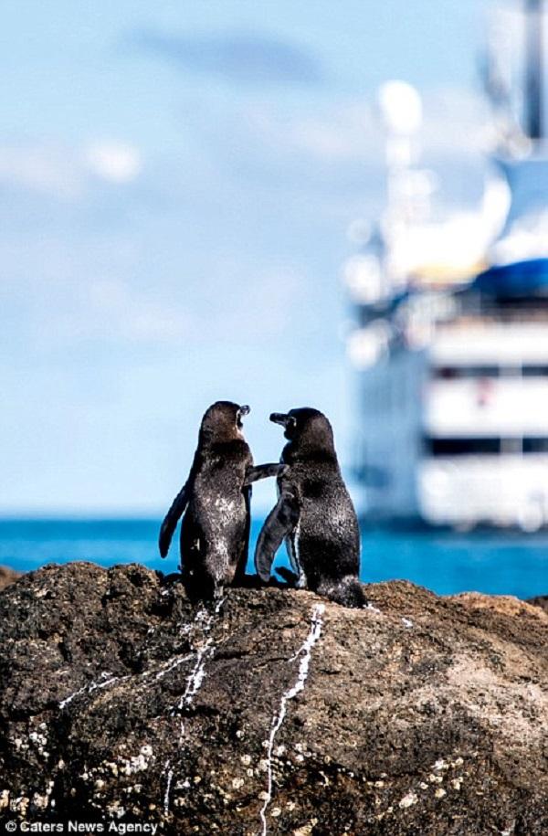 Những hình ảnh hơn vạn lời nói cho thấy động vật cũng có tình yêu đẹp thế này - Ảnh 5.