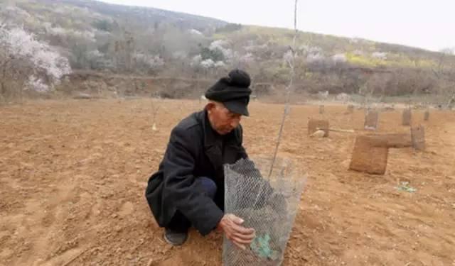 11 năm trồng hoa đào trên đồi trống, ai cũng tưởng lão nông này gàn dở, cho đến khi biết lý do... - Ảnh 2.