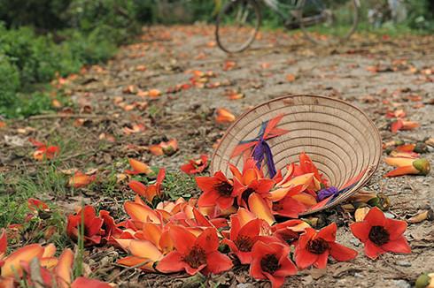 Tháng 3 mùa hoa gạo, đừng bỏ lỡ những bài thuốc chữa bệnh quý báu từ loại cây quen thuộc này - Ảnh 3.