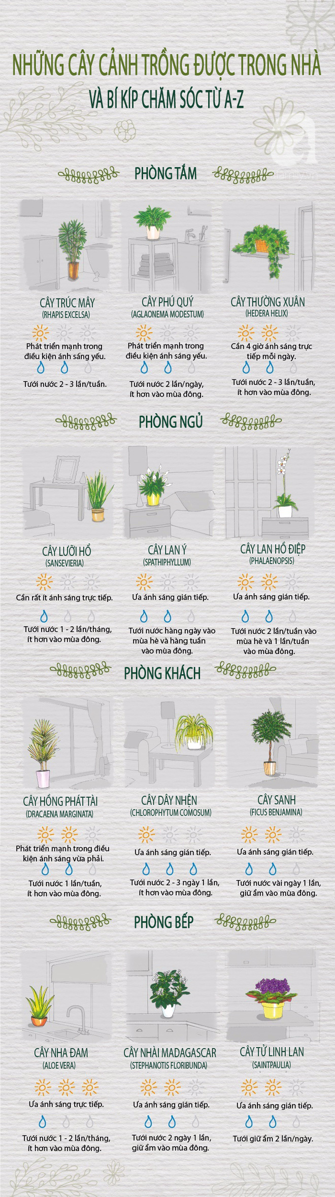 12 loại cây cảnh đặc biệt sống tốt nếu để trong nhà và bí kíp chăm sóc từ A đến Z - Ảnh 1.