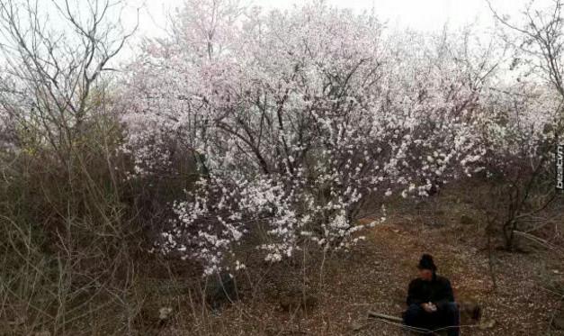 11 năm trồng hoa đào trên đồi trống, ai cũng tưởng lão nông này gàn dở, cho đến khi biết lý do... - Ảnh 4.
