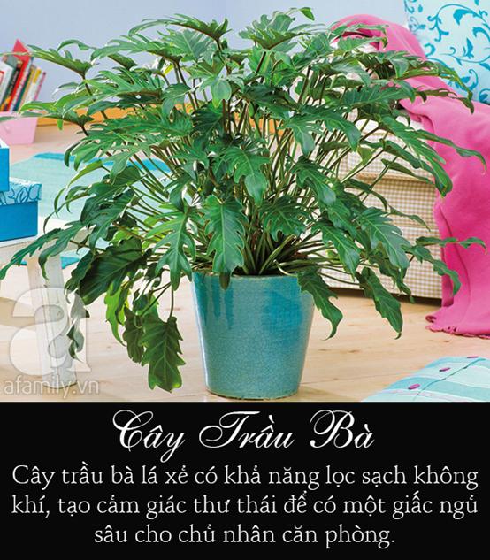 6 loại cây cảnh để trong phòng giúp bạn đặt lưng xuống là ngủ ngon lành