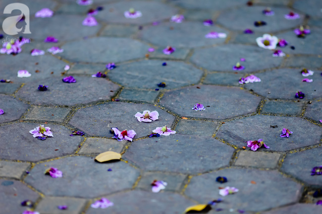 Sắc tím hoa bằng lăng khiến Hà Nội thơ mộng hơn giữa mùa hạ cháy - Ảnh 5.