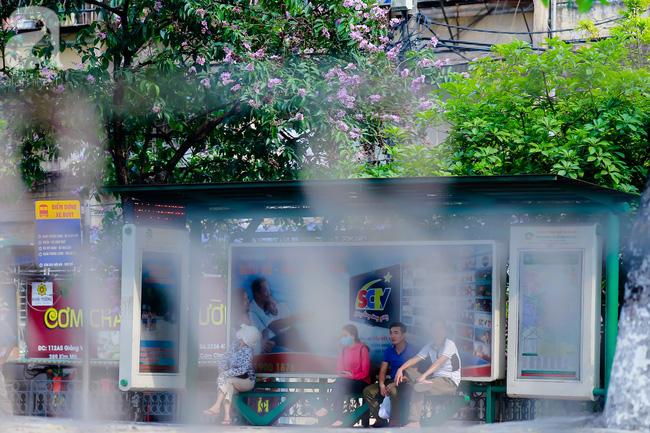 Sắc tím hoa bằng lăng khiến Hà Nội thơ mộng hơn giữa mùa hạ cháy - Ảnh 8.