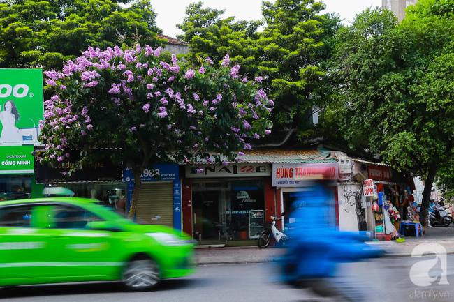 Sắc tím hoa bằng lăng khiến Hà Nội thơ mộng hơn giữa mùa hạ cháy - Ảnh 10.