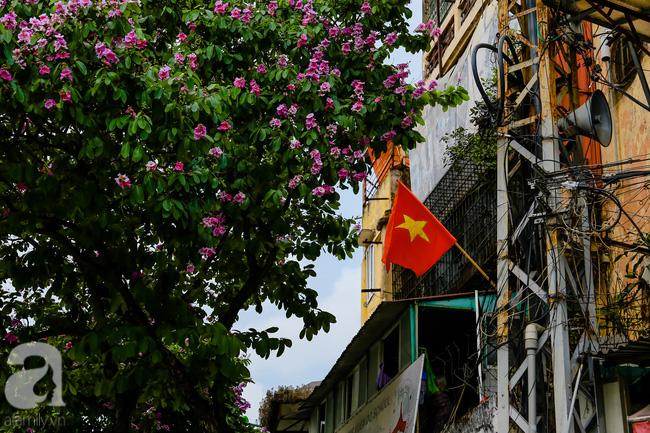 Sắc tím hoa bằng lăng khiến Hà Nội thơ mộng hơn giữa mùa hạ cháy - Ảnh 4.