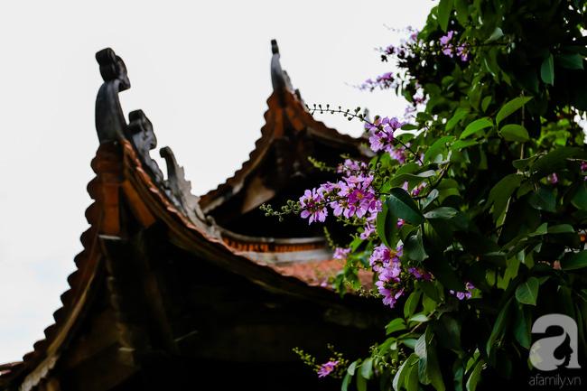 Sắc tím hoa bằng lăng khiến Hà Nội thơ mộng hơn giữa mùa hạ cháy - Ảnh 9.