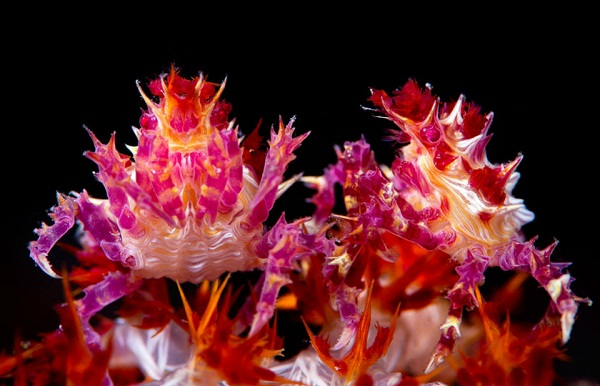 Đây chính là những vị nam vương, hoa hậu trong thế giới động vật - Ảnh 3.