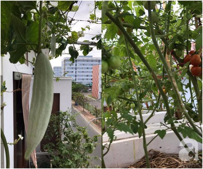 Sân thượng 10m² xanh mướt của bà mẹ dám bỏ sự nghiệp để ở nhà trồng rau, chăm con - Ảnh 8.