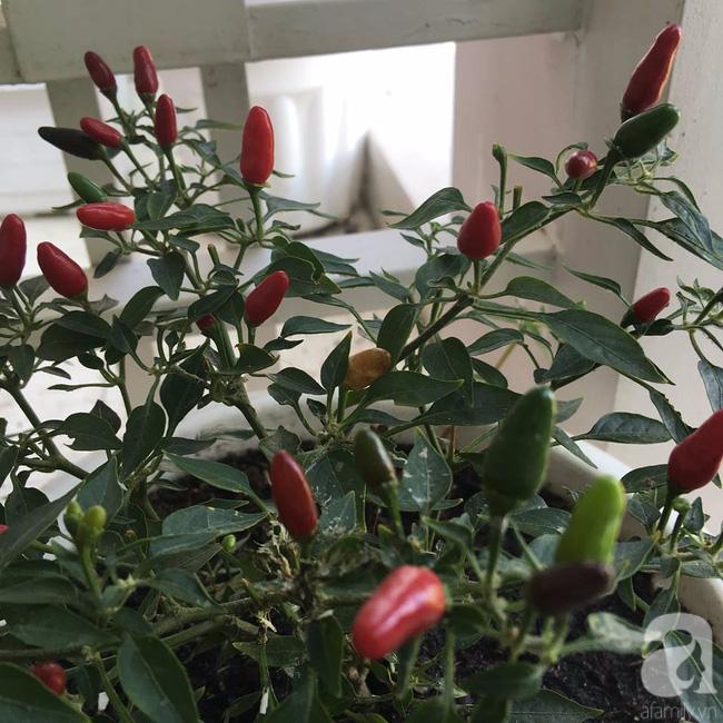 Sân thượng 10m² xanh mướt của bà mẹ dám bỏ sự nghiệp để ở nhà trồng rau, chăm con - Ảnh 15.