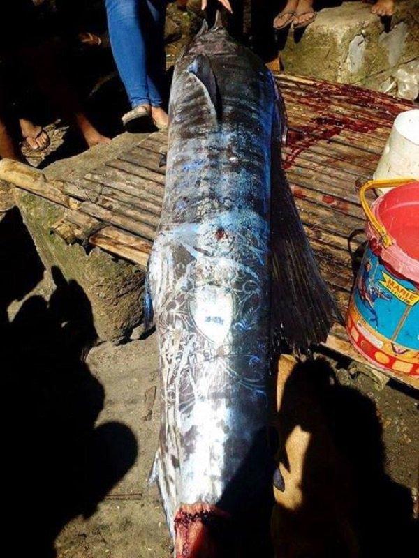 Bắt được con cá lớn, ngư dân sửng sốt khi nhìn thấy những hoa văn bí ẩn trên mình cá - Ảnh 2.