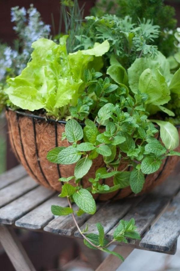 6 loại rau củ quả bạn có thể trồng trong giỏ mà vẫn sai quả, tươi tốt - Ảnh 5.